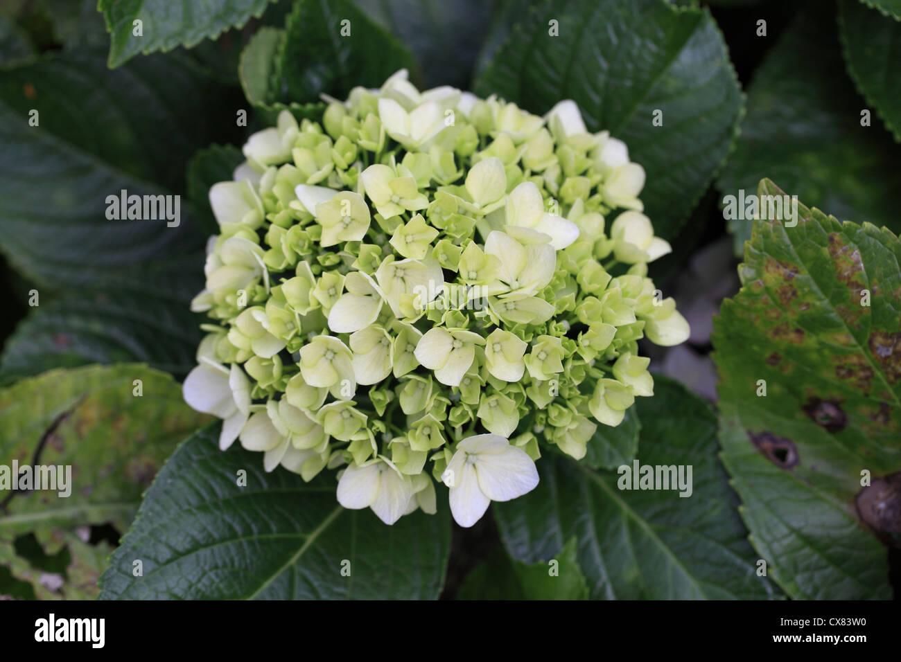 Bunch Of White Tiny Flowers Stock Photo 50580460 Alamy
