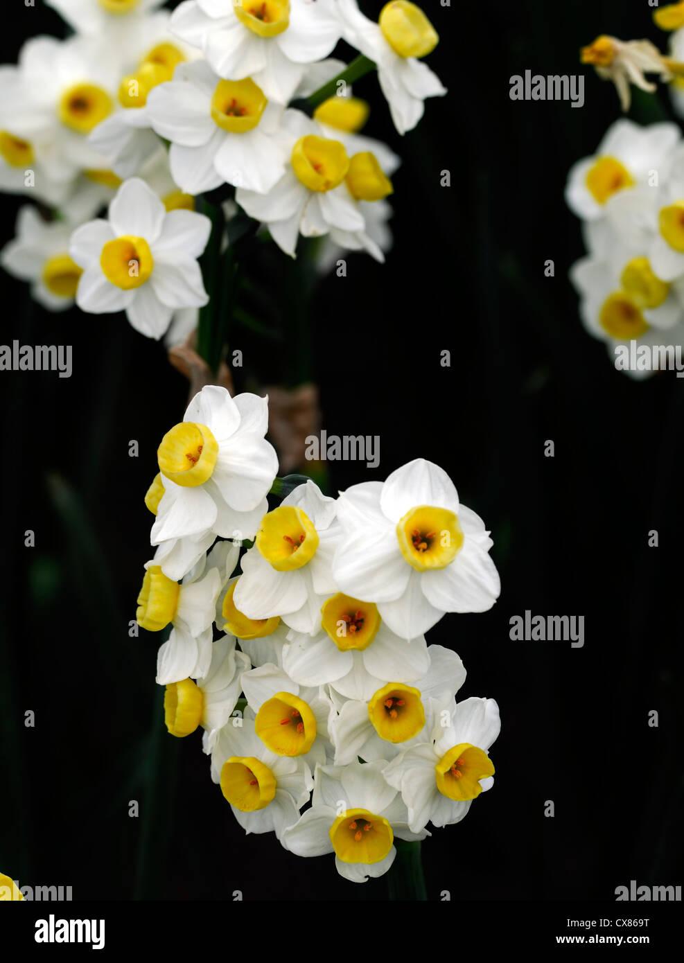 Daffodil Geranium Stock Photos Daffodil Geranium Stock Images Alamy