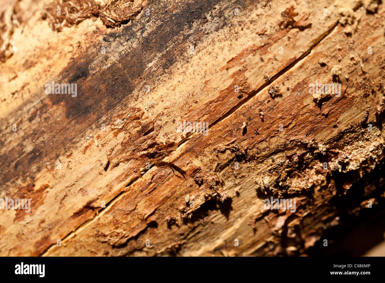 Brown pine wood texture - Stock Image