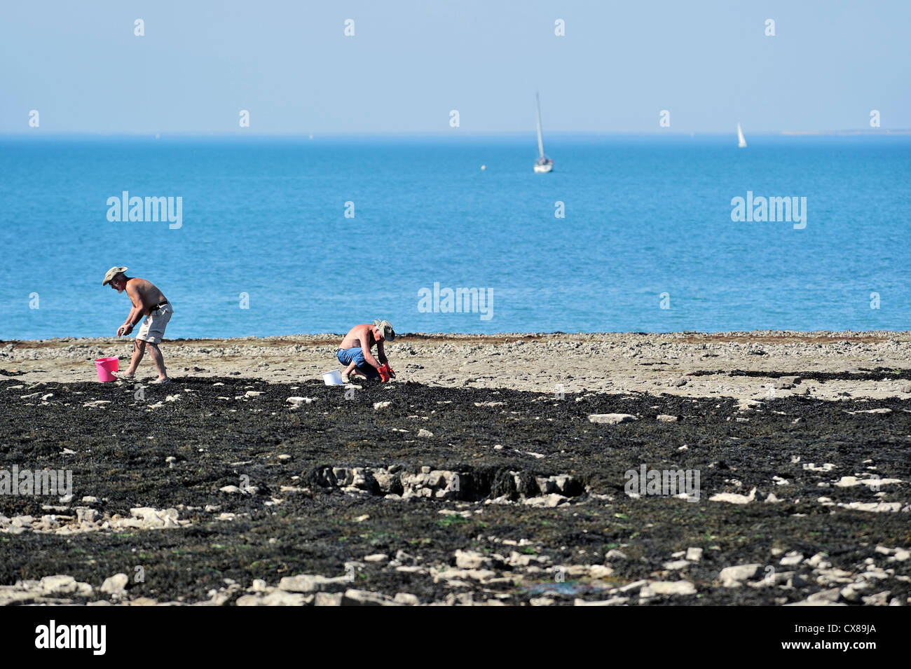 Men with buckets looking for oysters and shellfish on the beach in summer on the island Ile de Ré, Charente - Stock Image