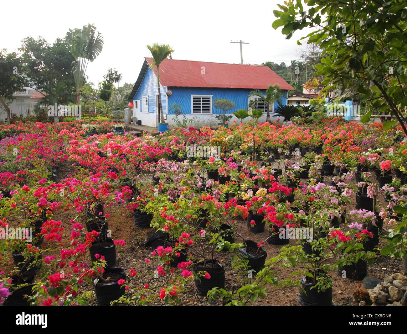 Magnificent Garden Center Elaboration - Brown Nature Garden ...