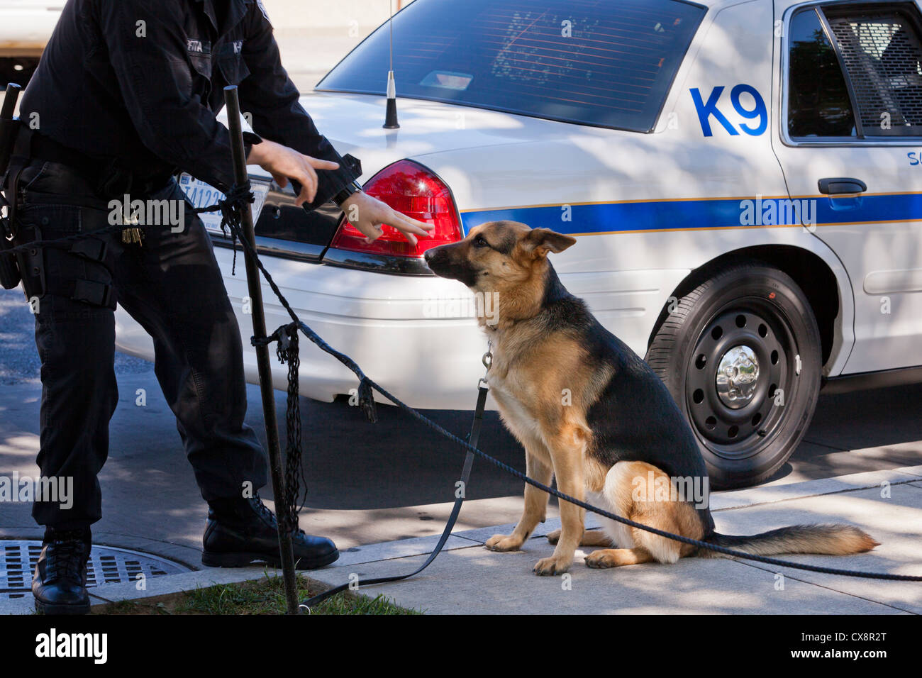 Police dog (Police K9 dog sit) - Washington, DC USA - Stock Image