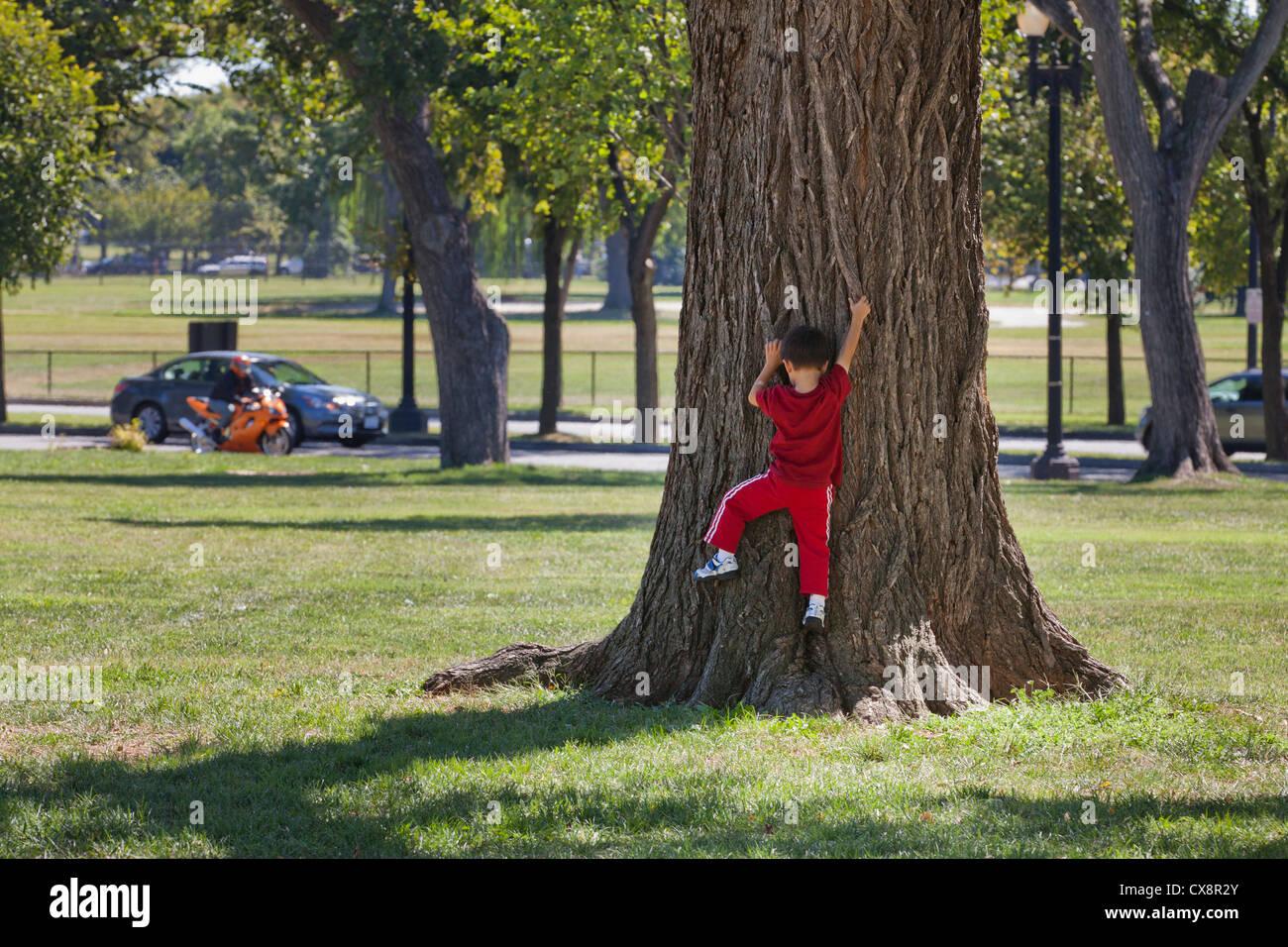 Boy climbing a large tree trunk - Stock Image