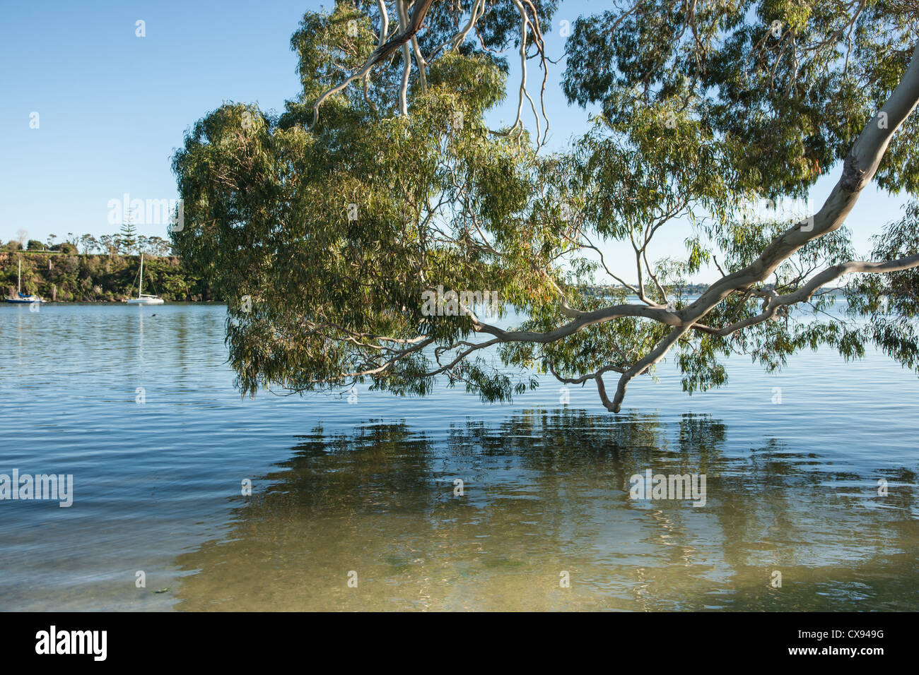 Leafy tree leans over the waters edge in an idyllic scene. - Stock Image
