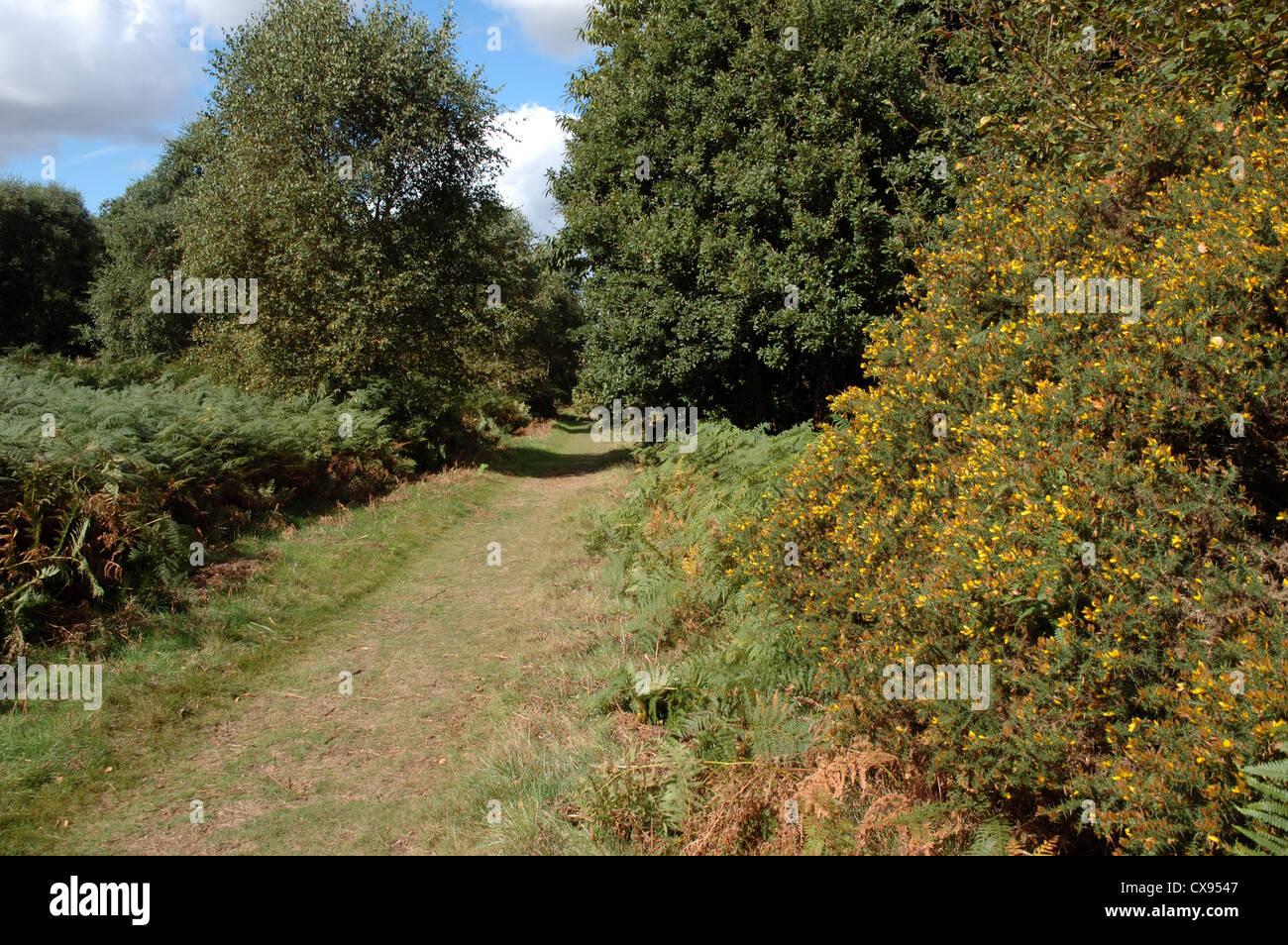 Sandlings Walk, Tunstall Forest, Suffolk, UK Stock Photo