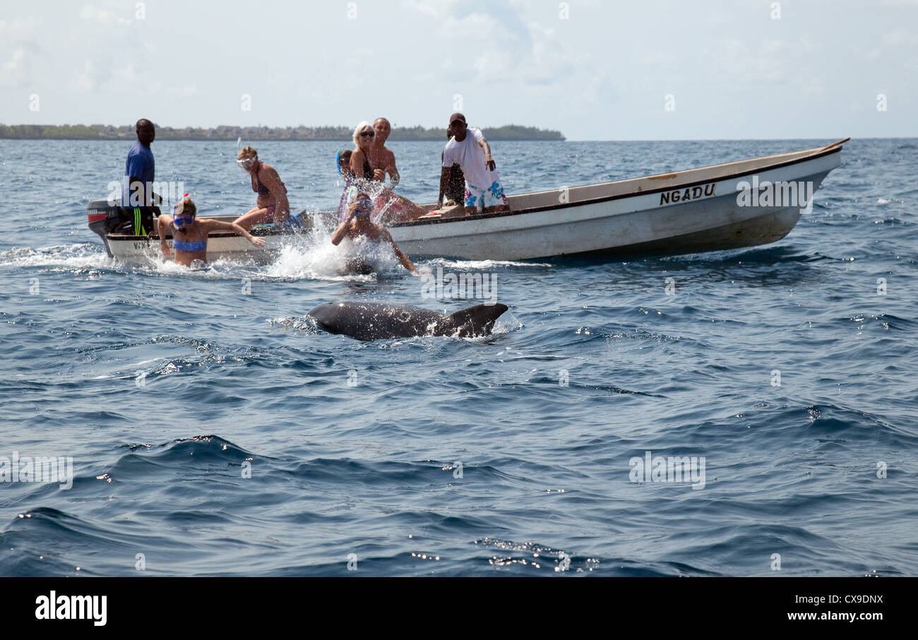 People watching and swimming with dolphins, Zanzibar Africa - Stock Image