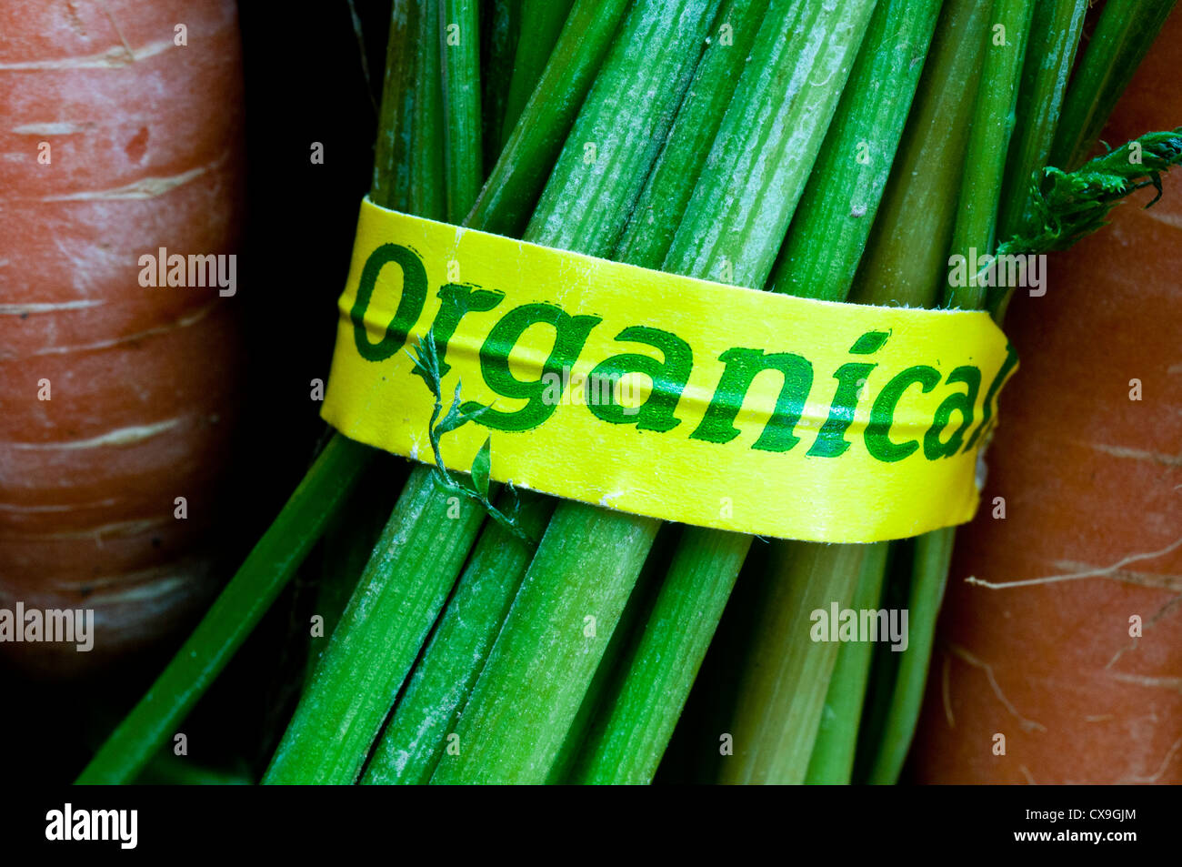 Organic label on bunch of carrots - Stock Image