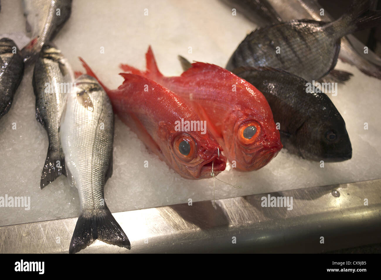 Fish For Sale Stock Photos & Fish For Sale Stock Images - Alamy