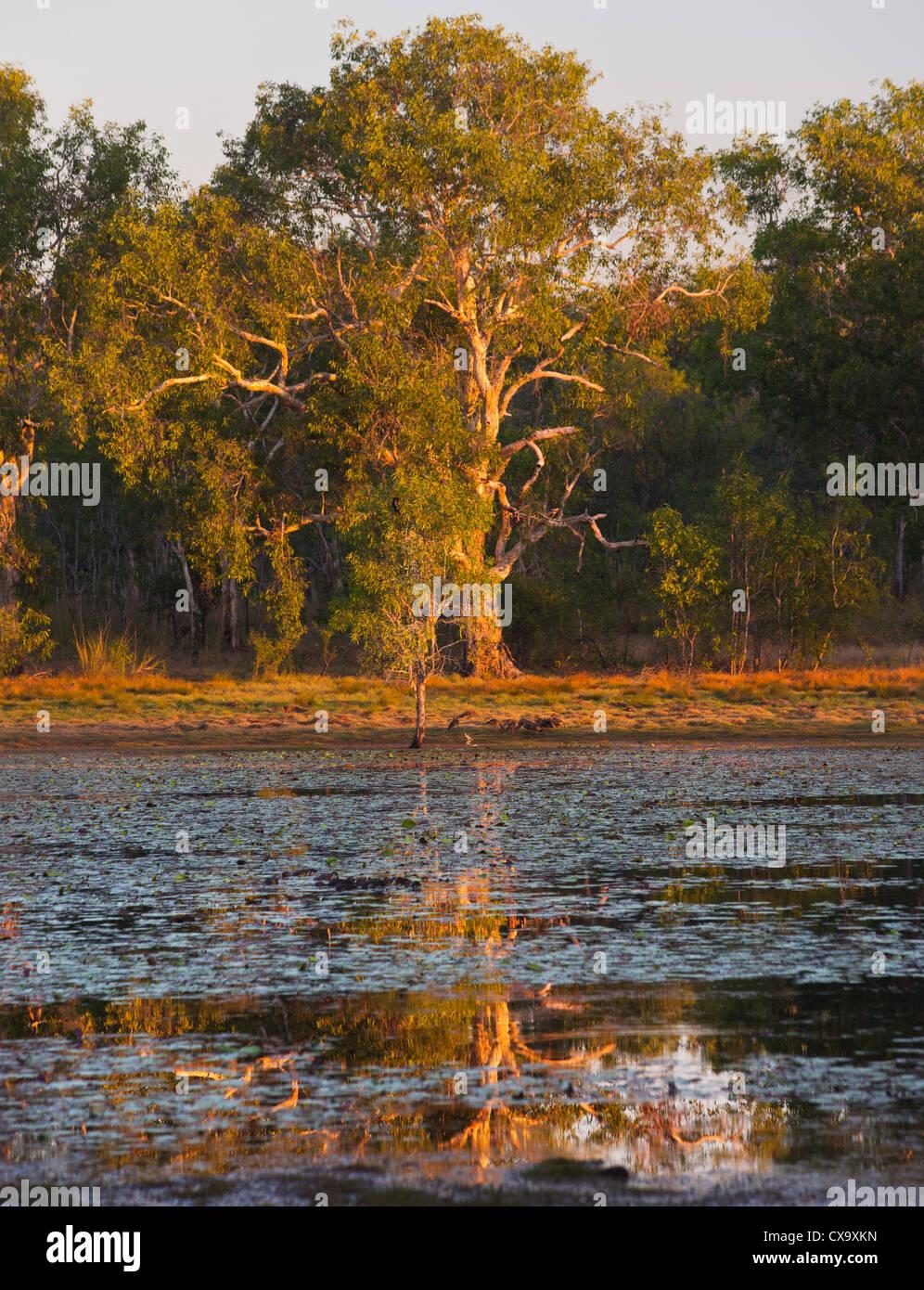Anbangbang Billabong, Kakadu National Park, Northern Territory - Stock Image