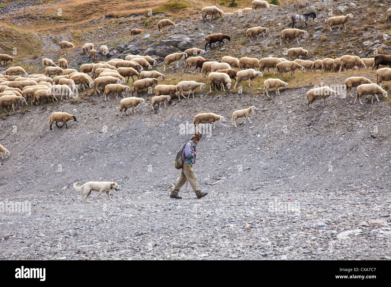 Shepherd and sheep on the mountain summer pastures near Sestriere, Italy - Stock Image