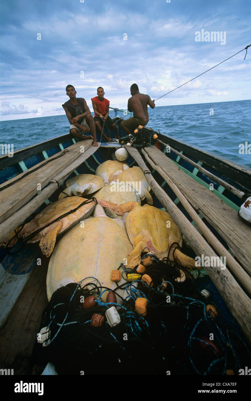 Miskito Indian fishermen sailing their Duritara loaded with Green Turtles (Chelonia mydas). Puerto Cabezas, Nicaragua, - Stock Image