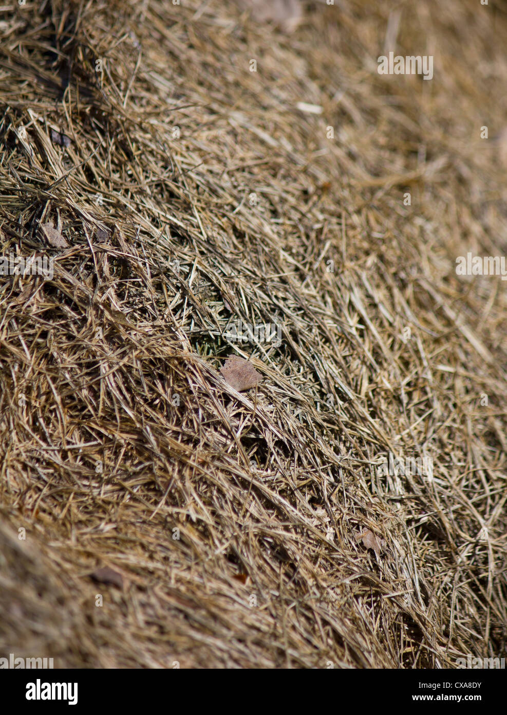 Autumnal / autumn image Straw pile with a single leaf in the middle, muted tones slowly composting - Stock Image