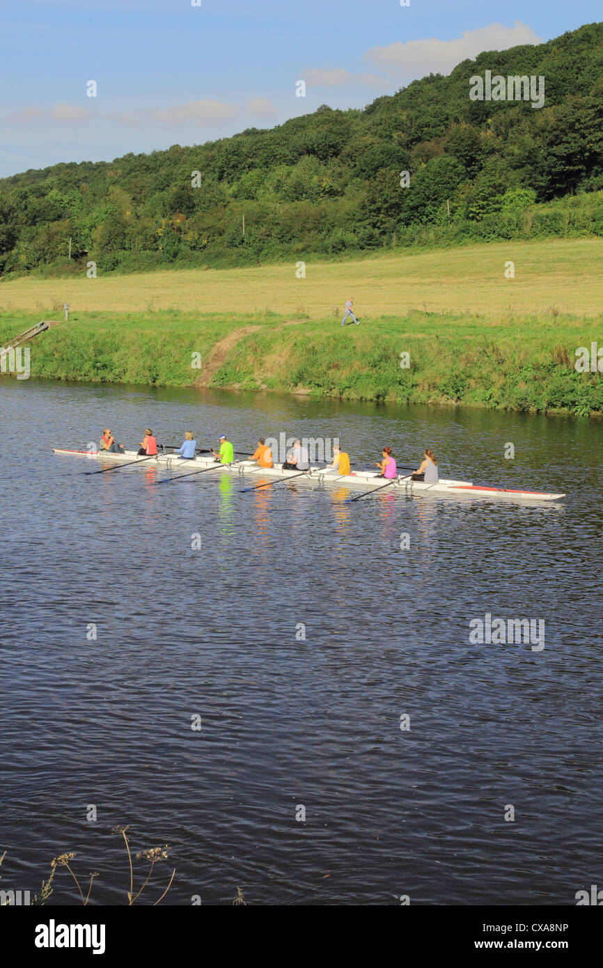 Eight Sculls Rowing Along the River Severn, Worcestershire, England, UK - Stock Image