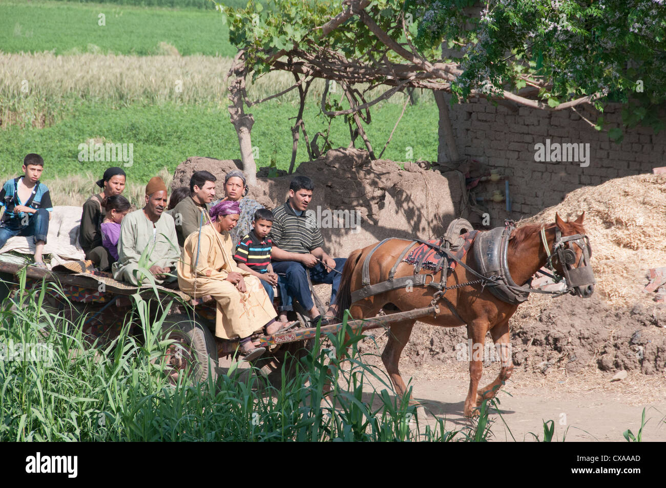 Daily life in the Egyptian countryside - Stock Image