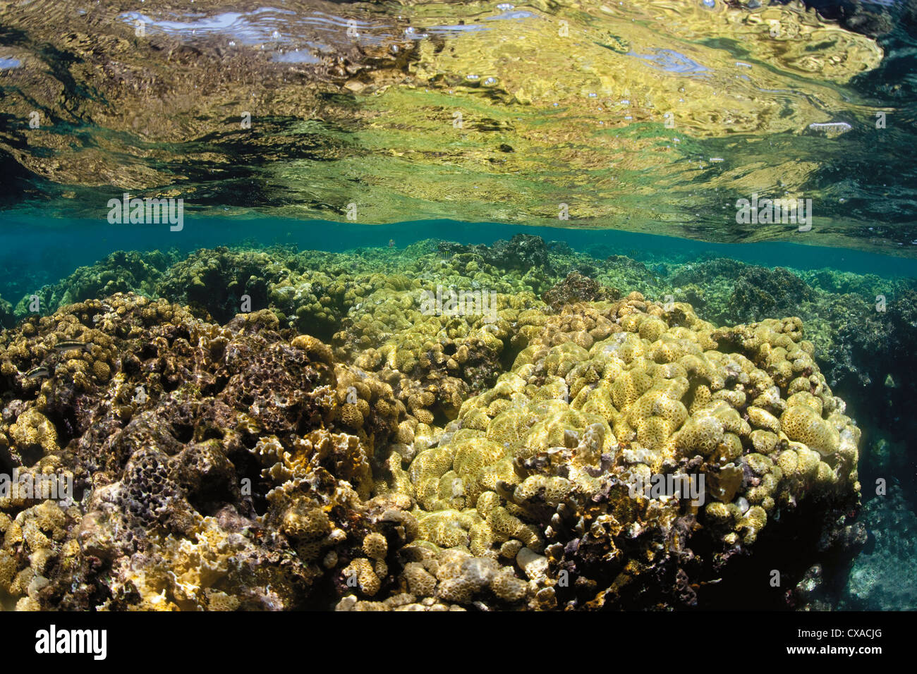 Coral reef at the surface of the ocean in Honduras. - Stock Image