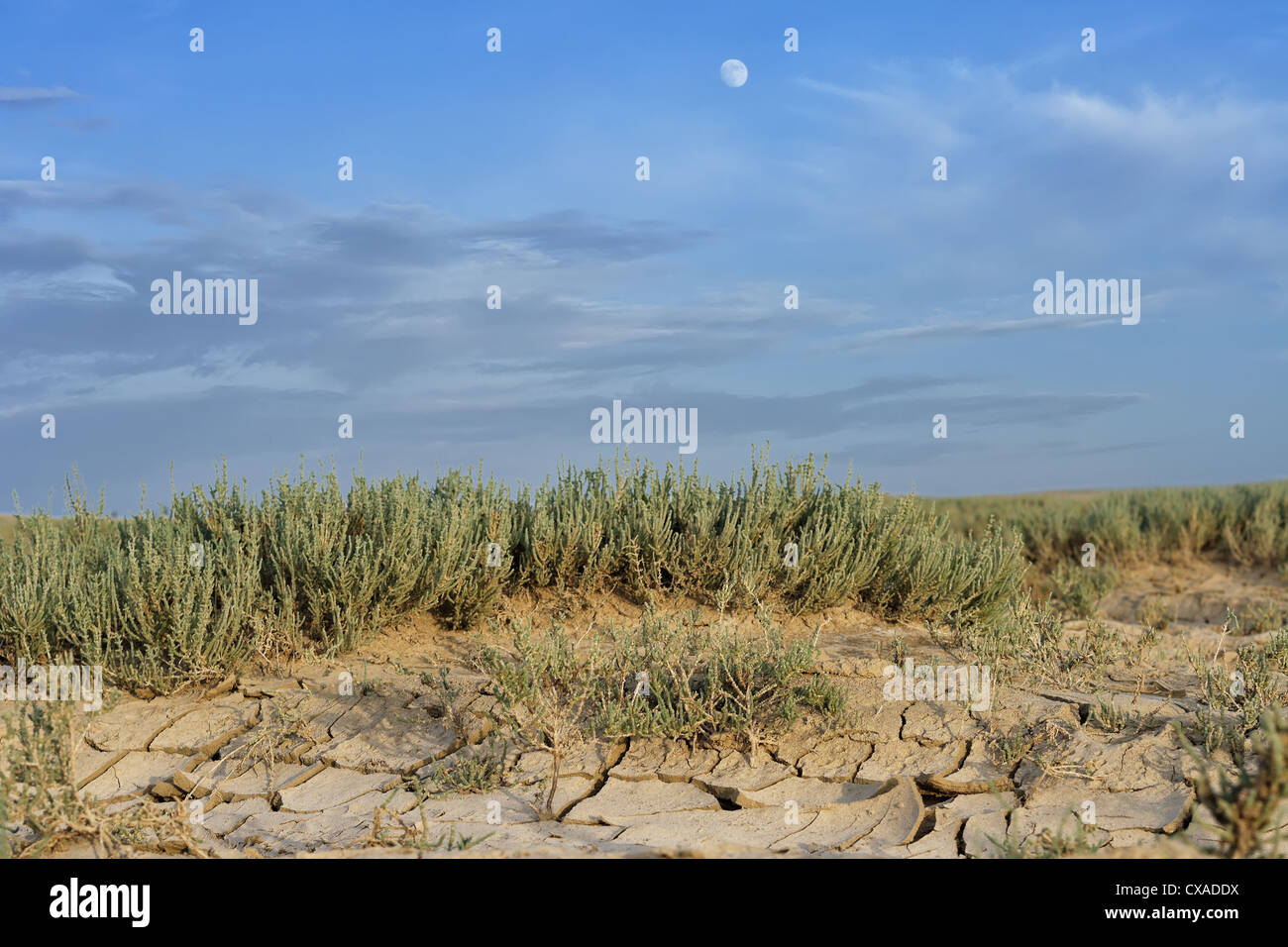 arid, background, blue, climate, climate change, cracked, deserted, desiccated, disaster, drought, dry, earh, ecology, - Stock Image
