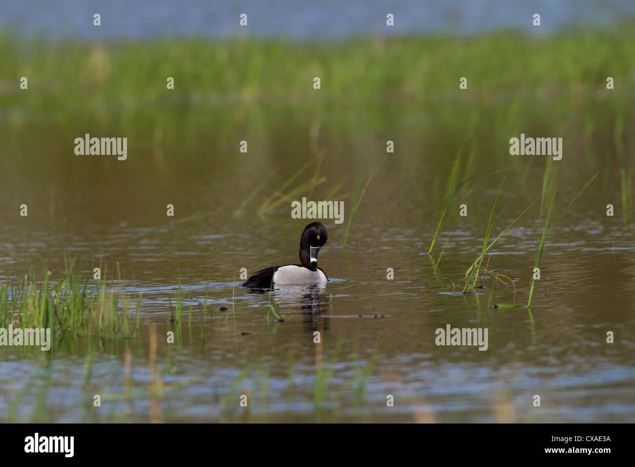 Preen Spring Stock Photos & Preen Spring Stock Images - Alamy
