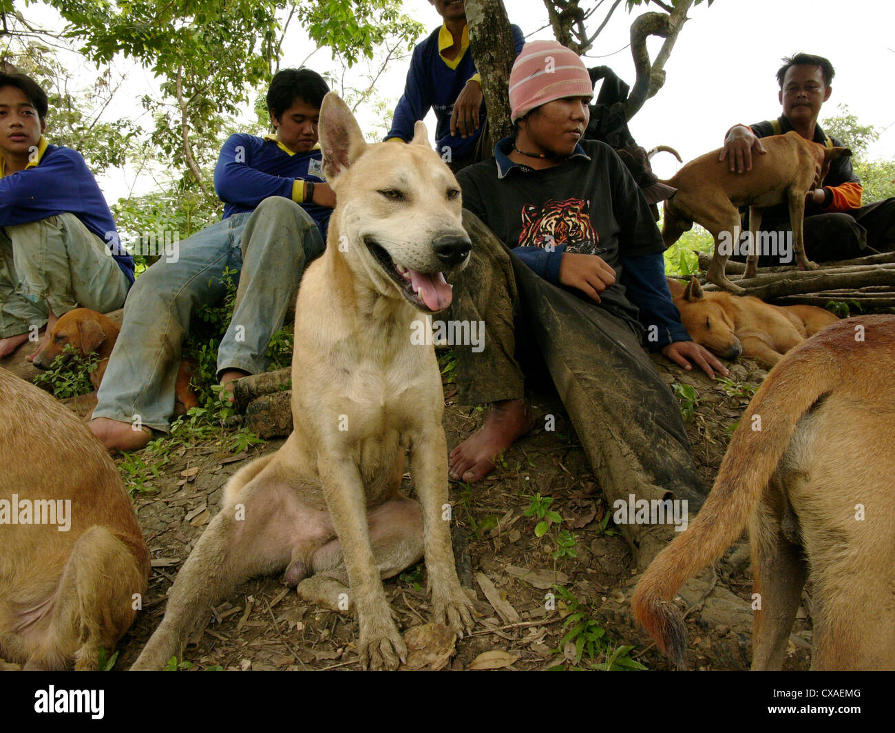 Members of a dog club rest with their hunting dogs as they search for wild boar in the jungles of West Java, Indonesia. - Stock Image