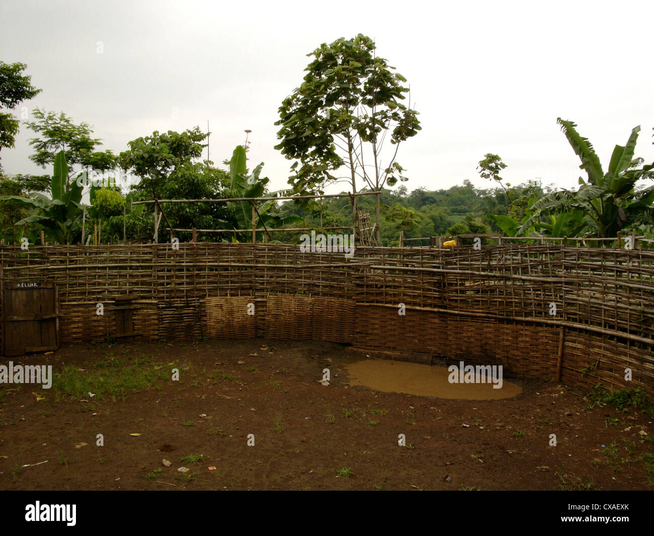 A boar-baiting arena lies empty after a legal boar-baiting contest in West Java, Indonesia. - Stock Image