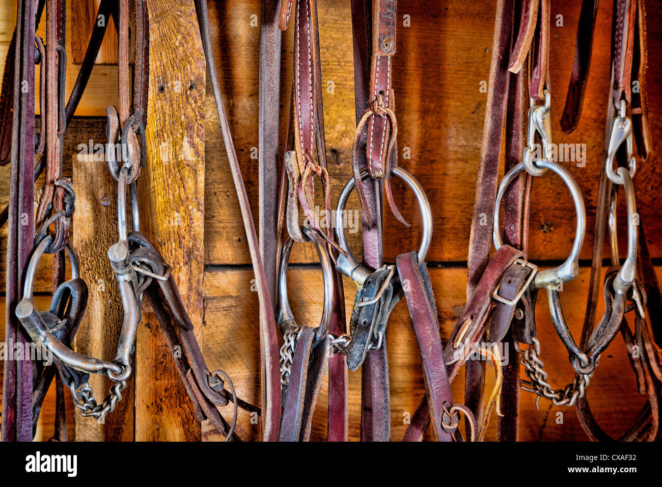 Reins in tack room on ranch in northeastern Wyoming - Stock Image