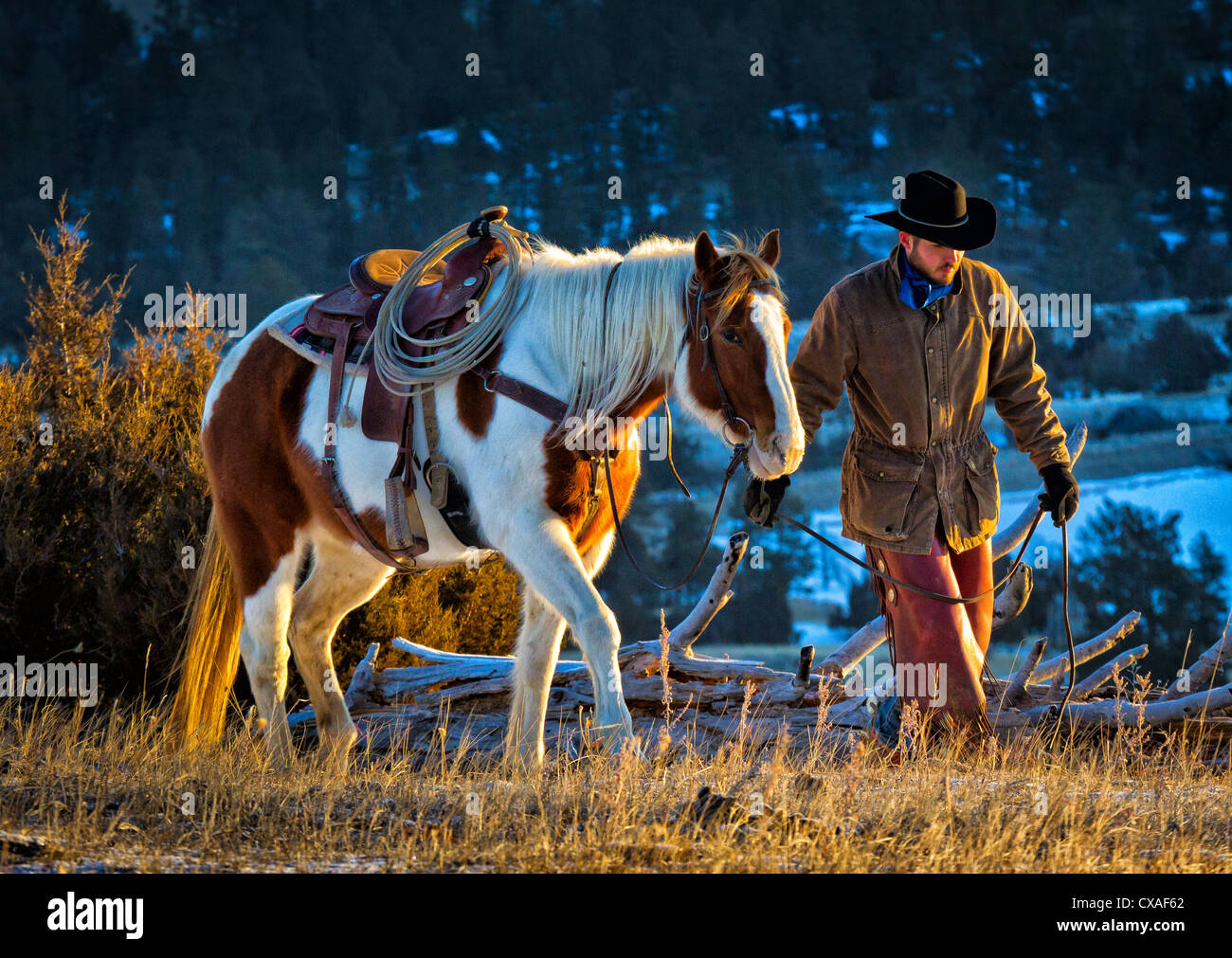 Cowboy leading his horse on a ranch in northeastern Wyoming - Stock Image