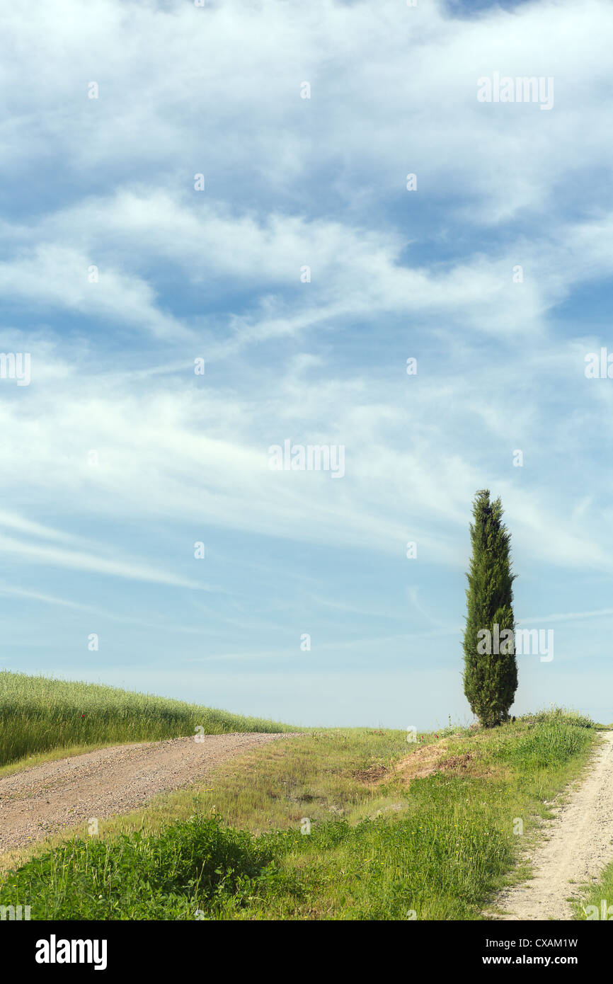 Lonely cypress tree on the top of a Tuscan hill near Pienza in Italy Stock Photo