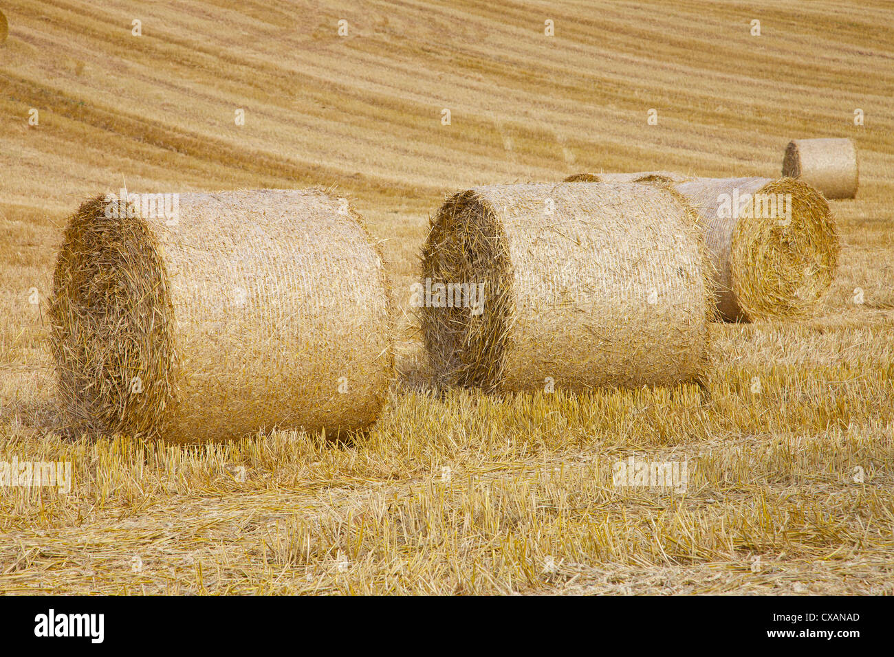 Straw bails in cut field Aiketgate, Eden Valley, Cumbria, England, UK - Stock Image