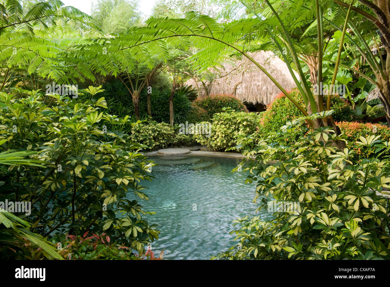 Pool in a tropical garden, Laguna, Philippines, Southeast Asia, Asia - Stock Image