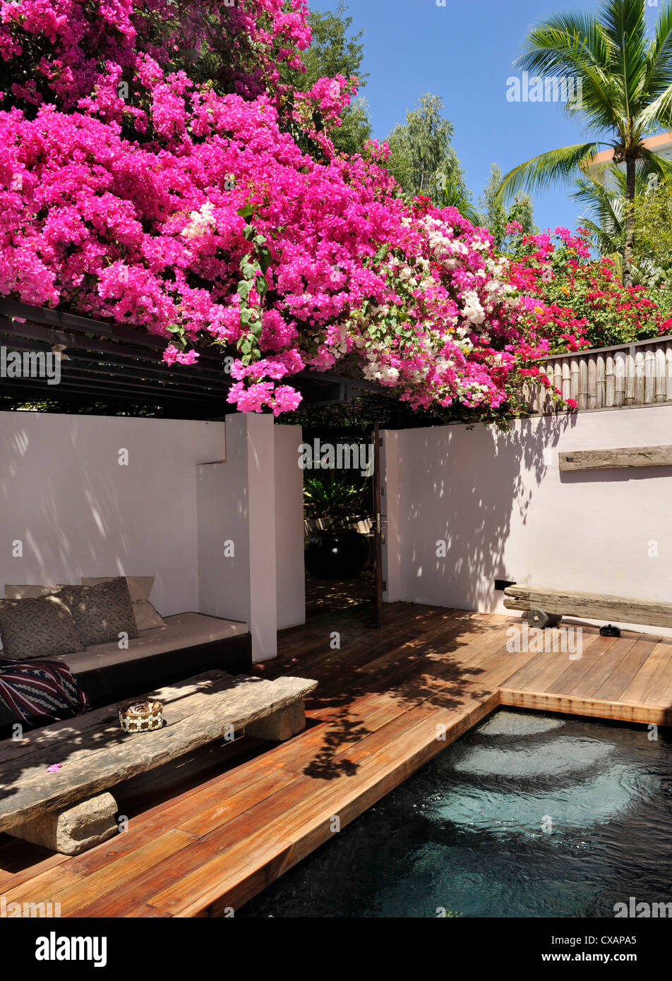 Bougainvillea, Cebu, Philippines, Southeast Asia, Asia - Stock Image