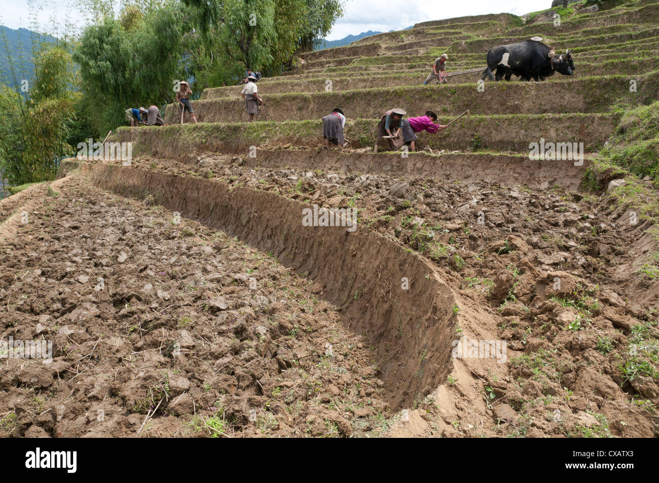 Female farmers at work in rice terraces, Radi, Eastern Bhutan, Bhutan, Asia - Stock Image