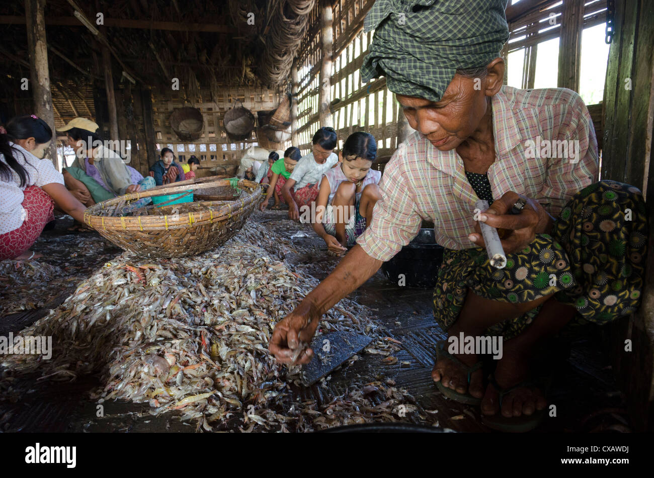 Elderly woman with cigar sorting out fish catch in the fishing village of Lay Win Kwin. Irrawaddy Delta, Myanmar - Stock Image