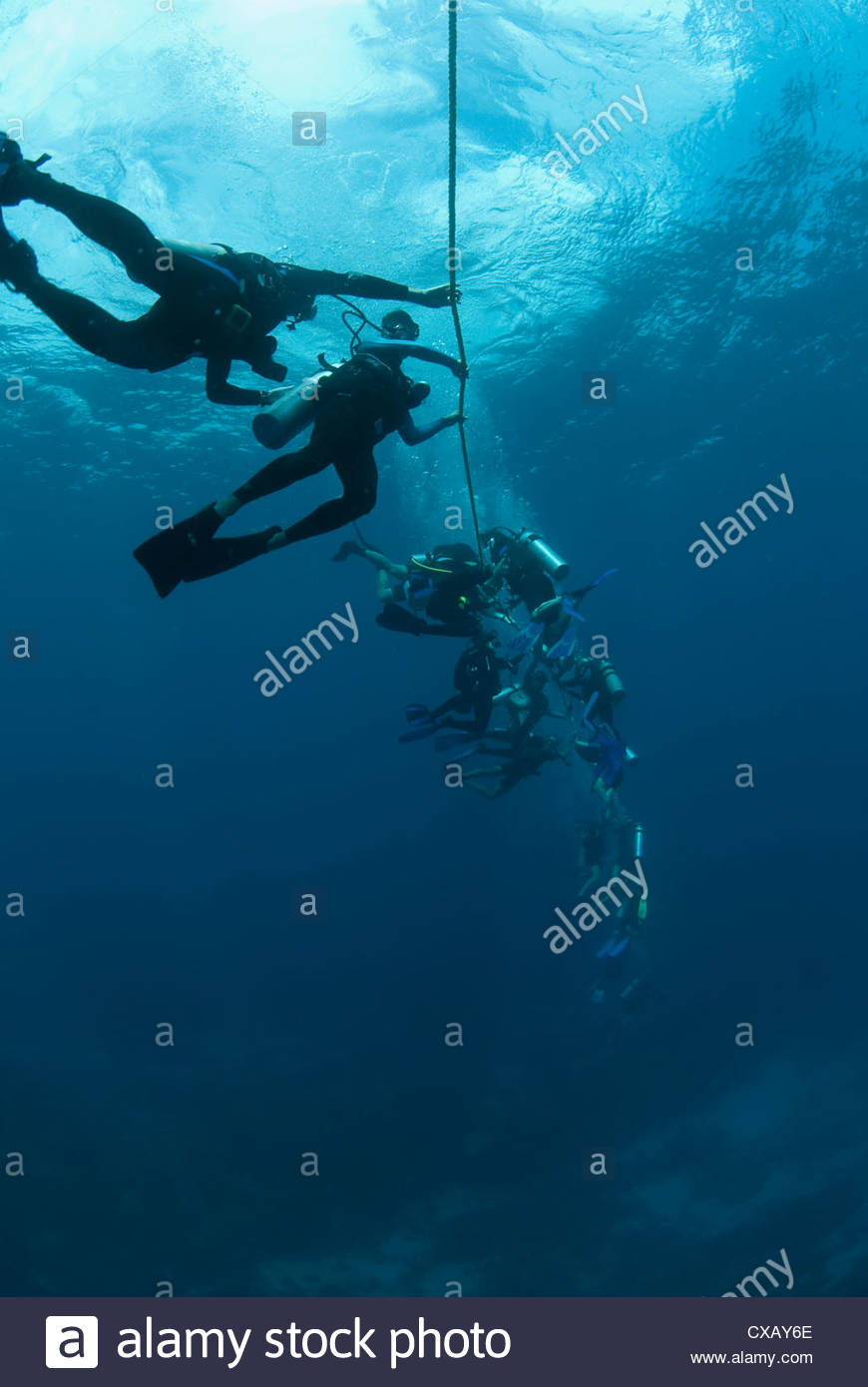 Divers following a current lile, Roatan, Bay Islands, Honduras, Caribbean, Central America - Stock Image