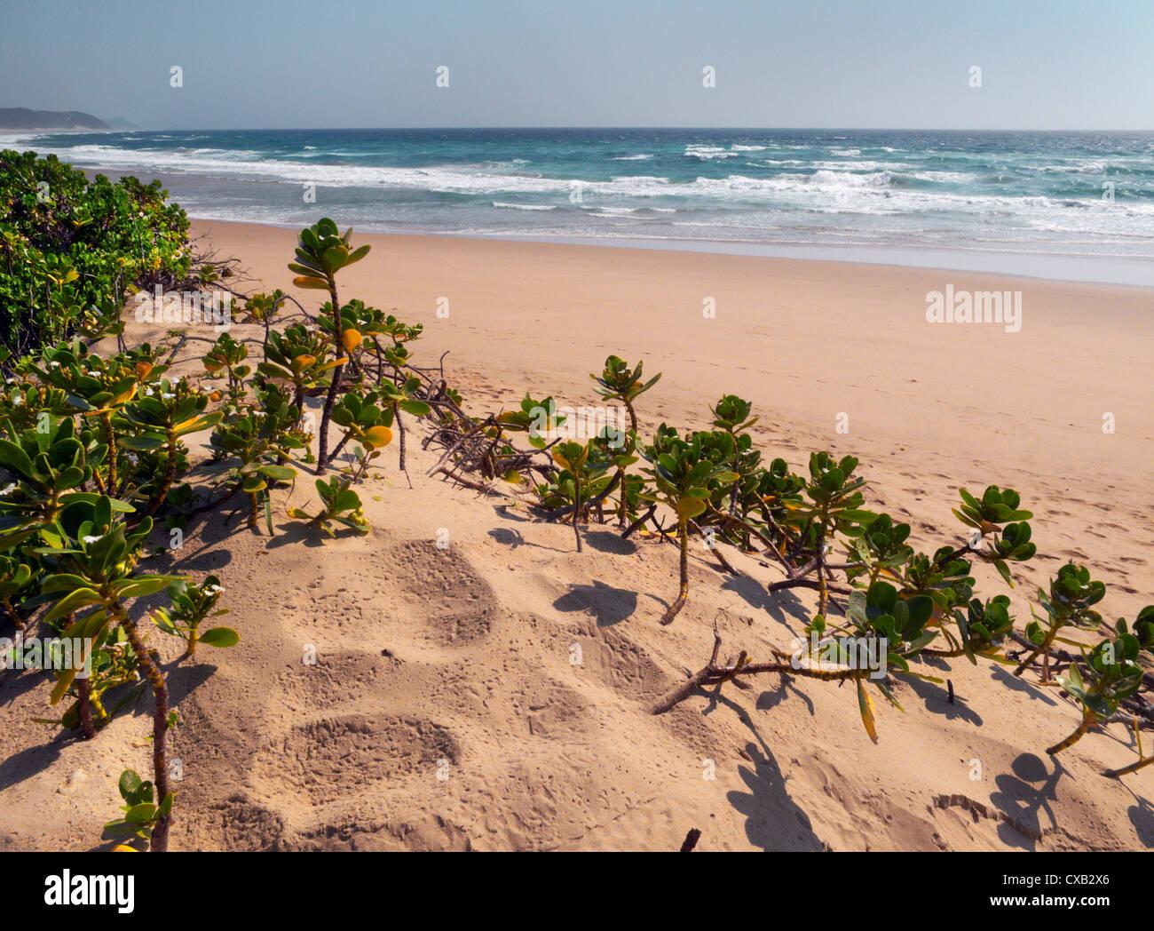 Coco Cabanas beach resort Ponta do Ouro southern Mozambique Stock