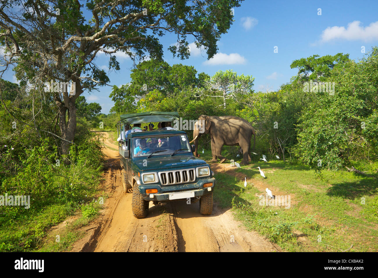 Asiatic tusker elephant (Elephas maximus maximus), close to tourists in jeep, Yala National Park, Sri Lanka, Asia - Stock Image