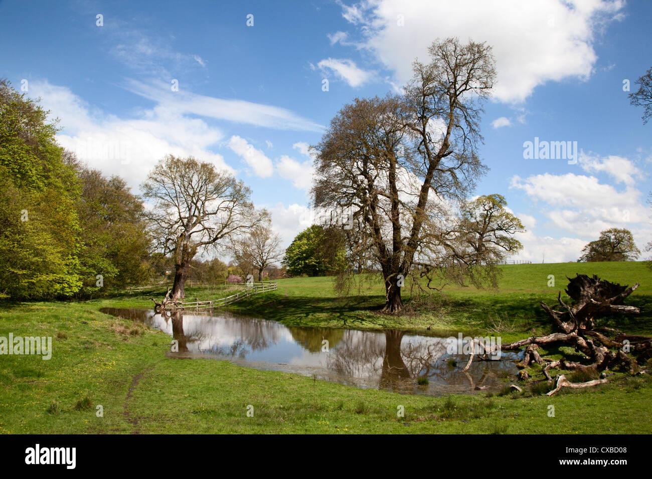 Spring trees and rainwater pond at Jacob Smith Park, Knaresborough, North Yorkshire, England, United Kingdom, Europe - Stock Image