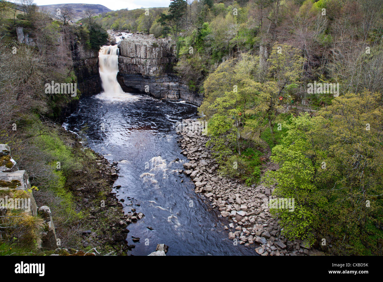 High Force in Upper Teesdale, County Durham, England, United Kingdom, Europe - Stock Image