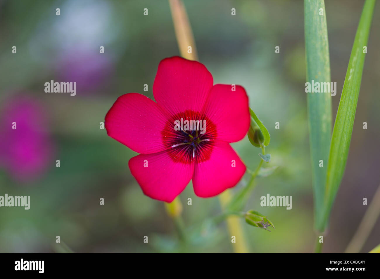 Gentle field fragile flower with textspace - Stock Image