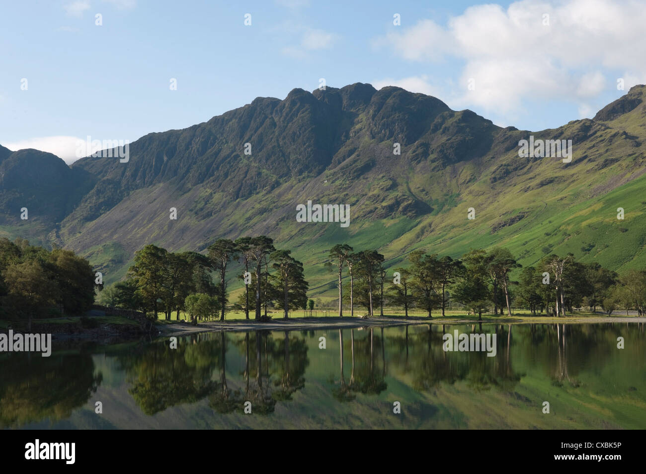 The Lake Buttermere pines with Haystacks, Lake District National Park, Cumbria, England, United Kingdom, Europe - Stock Image