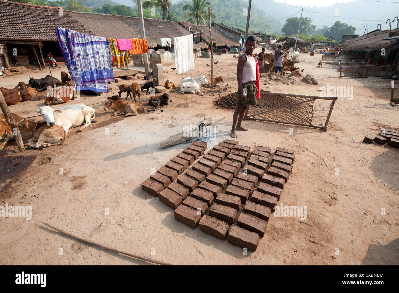 Young man standing in traditional Desia Kondh tribal village street, mud bricks drying in the sun, Bissam Cuttack, - Stock Image