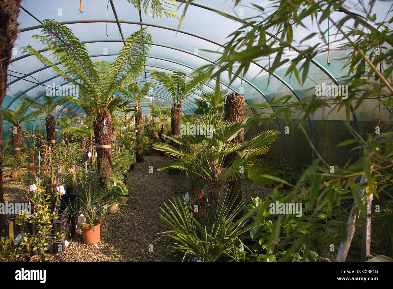 Fern Nursery Stock Photos & Fern Nursery Stock Images - Alamy