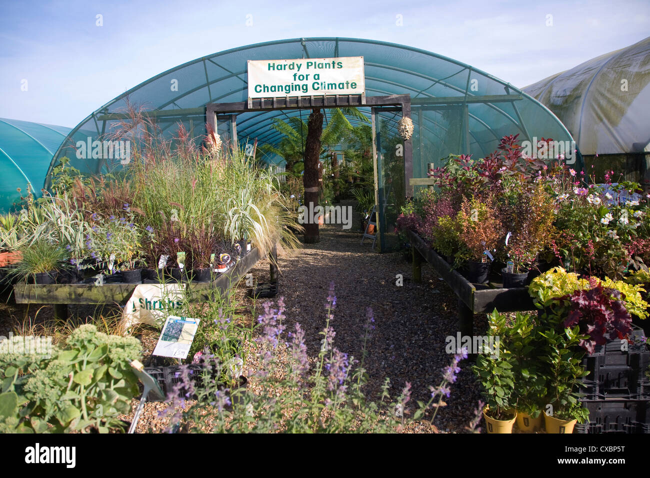 The Exotic Garden Company Hardy Plants for a Changing Climate nursery, Aldeburgh, Suffolk, England - Stock Image