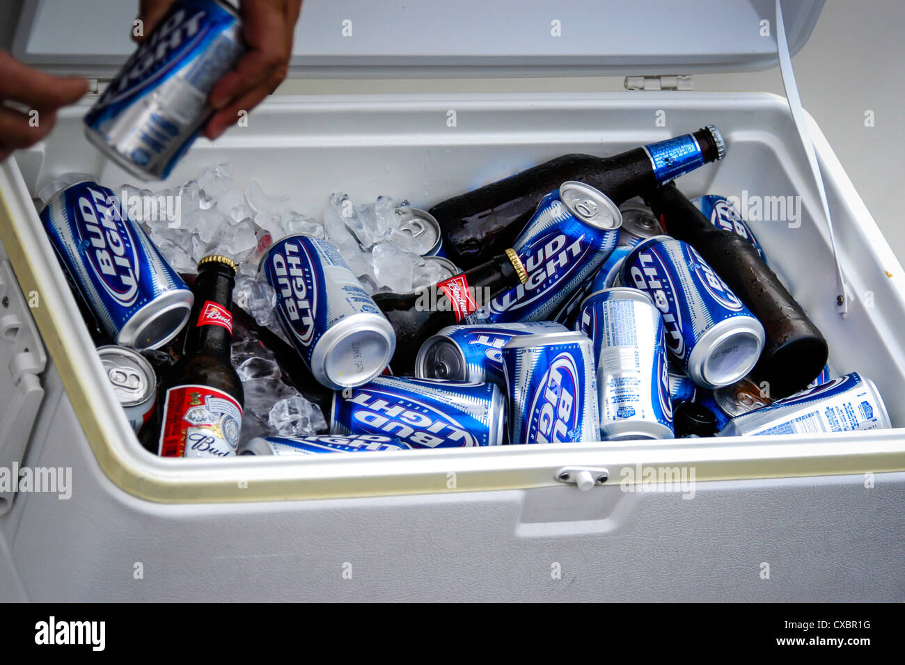 Tins and bottles of beer in an cooler box. - Stock Image