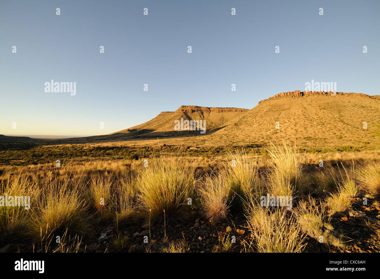 Early morning in the Karoo National Park, South Africa, Africa - Stock Image