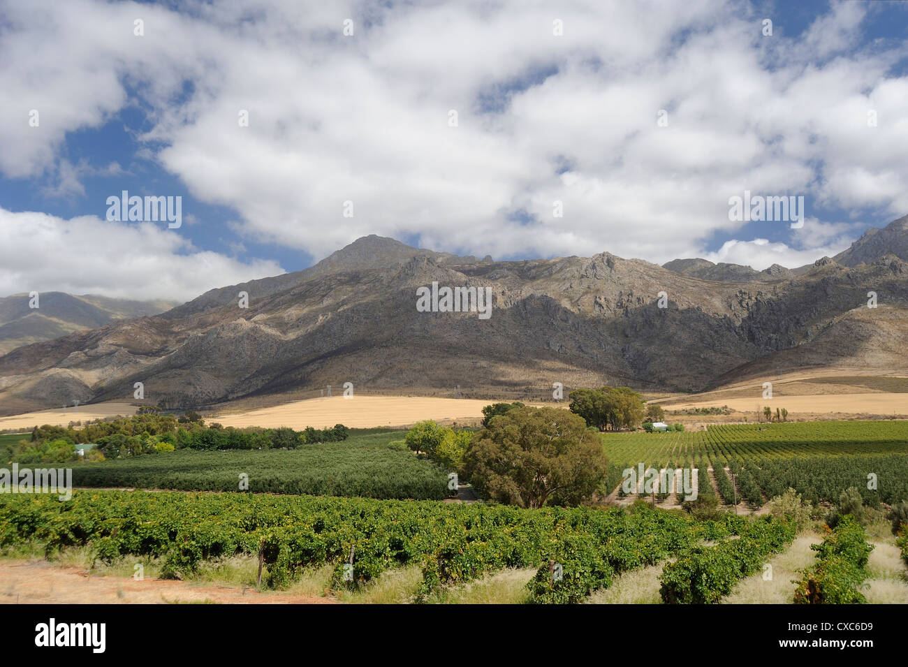 Wine producing estate, the Wine Route, Little Karoo, Eastern Cape, South Africa, Africa Stock Photo