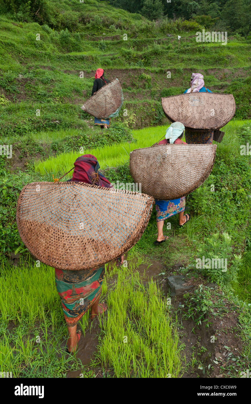 Female farmers in the field with traditional rain protection, lwang village, Annapurna area, Pkhara, Nepal, Asia - Stock Image