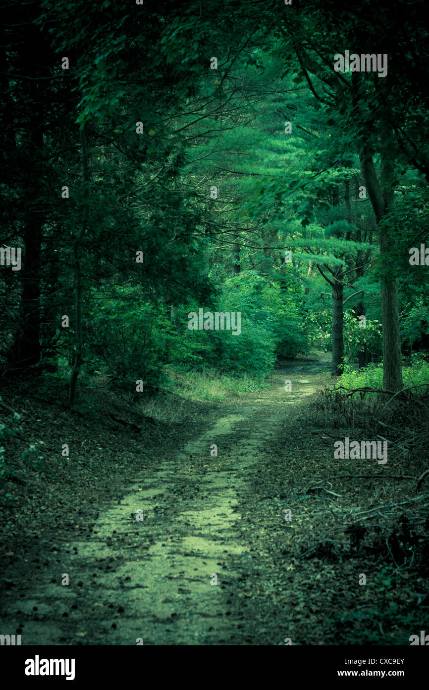 Enchanted green forest with mysterious look. Artistic Image - Stock Image