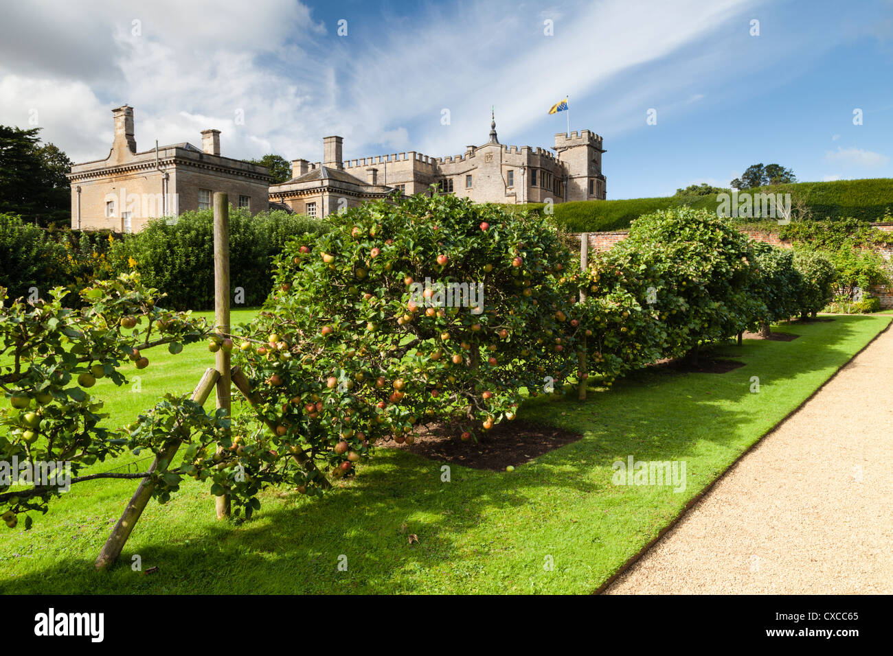 Ripened Apples growing on the espalier avenue of fruit trees within the walled garden of Rousham House in Oxfordshire, - Stock Image