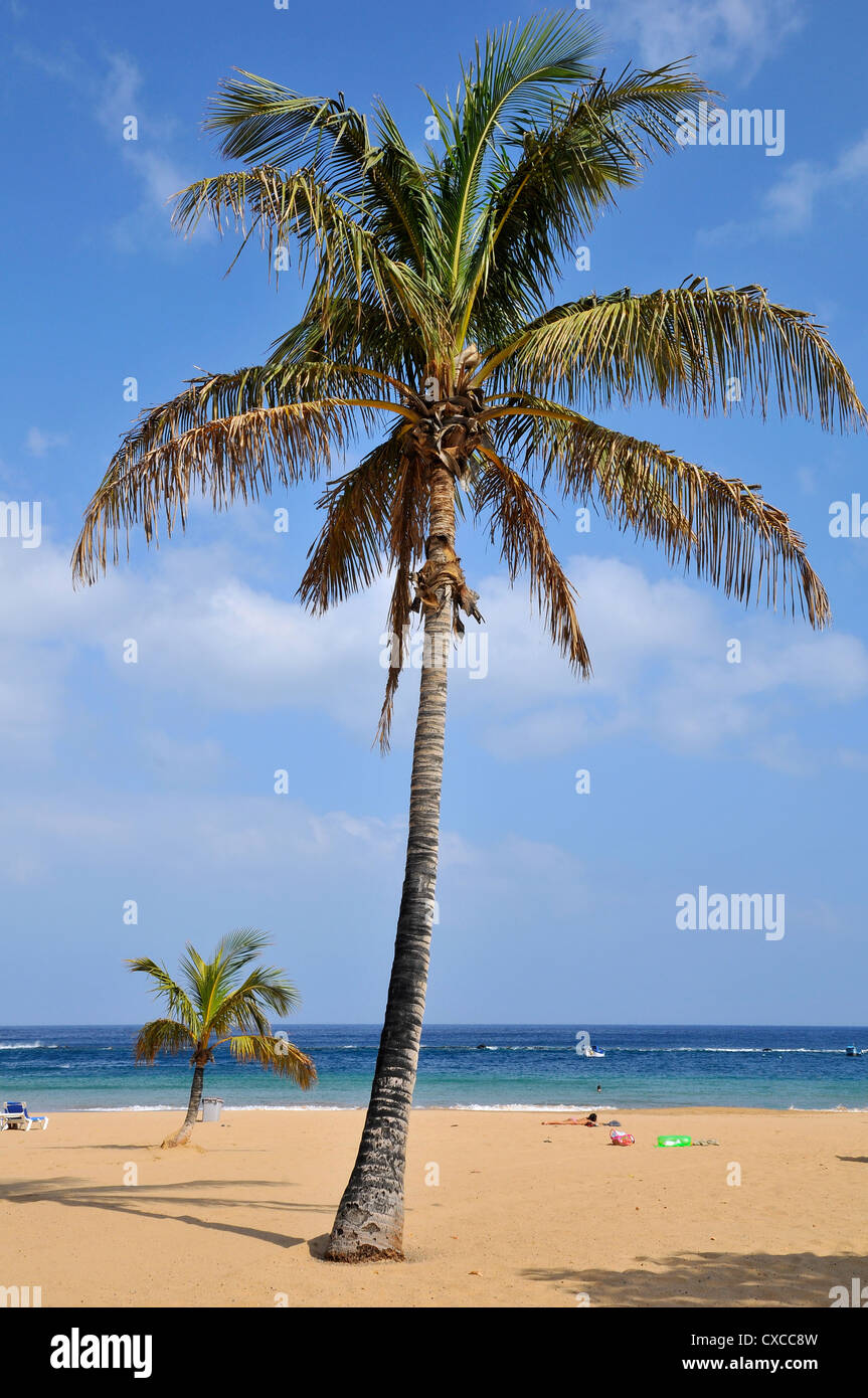 Palm Tree On The Beach Of Teresitas At Northeast Part Of