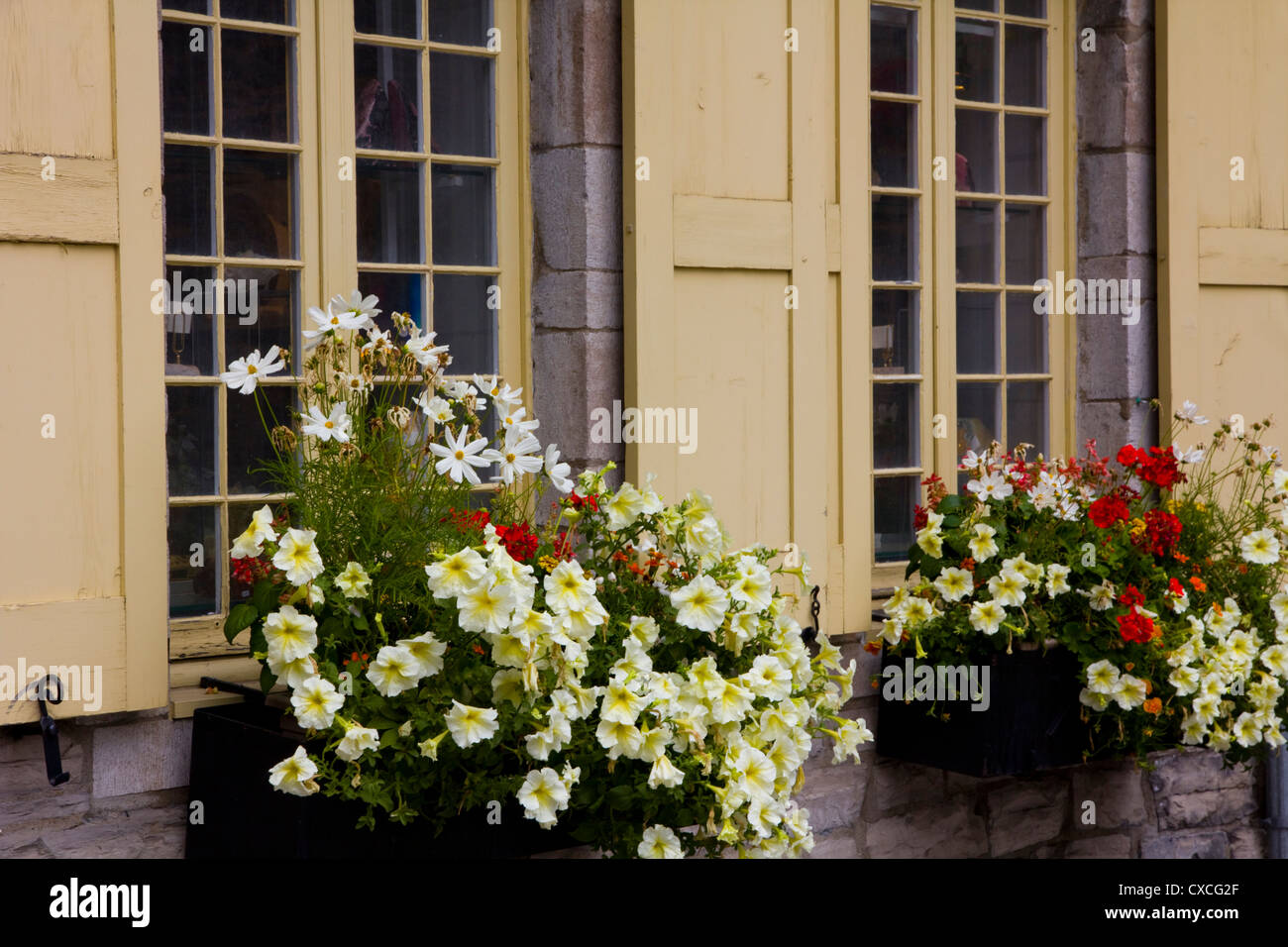 A window box blooms in Place Royale in the heart of historic Quartier Petit Champlain, Quebec City, Canada - Stock Image