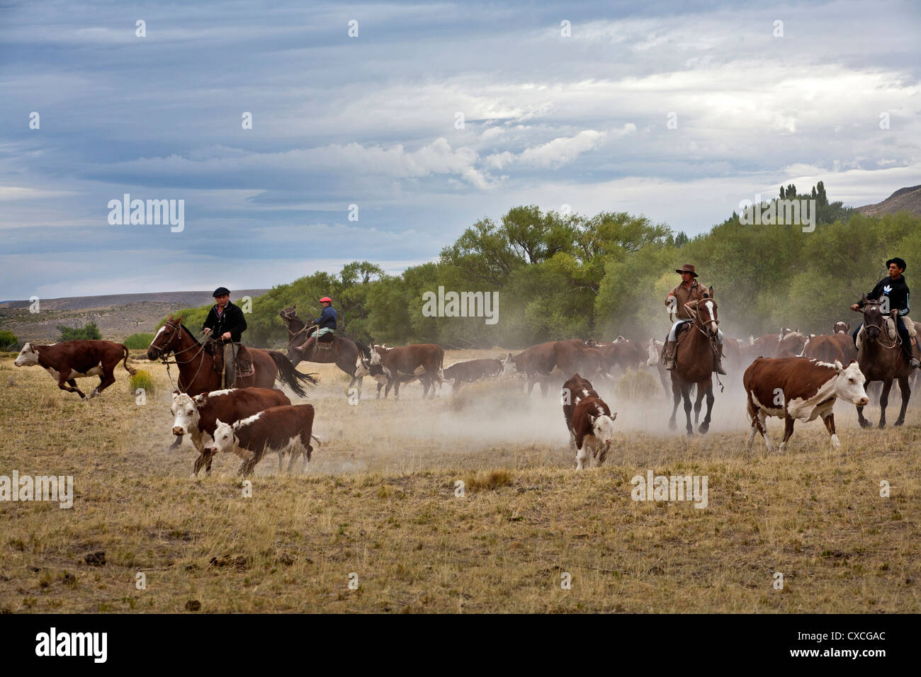 Gauchos with cattle at the Huechahue Estancia, Patagonia, Argentina. - Stock Image